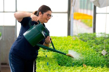 All about Cardiff Lawn and Garden