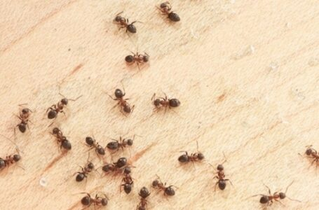 Ant Problems In Your Home?